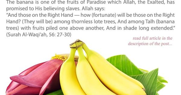 Banana is One of the Fruits of Paradise