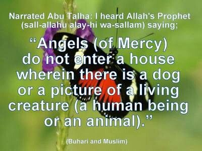 dogs and islam