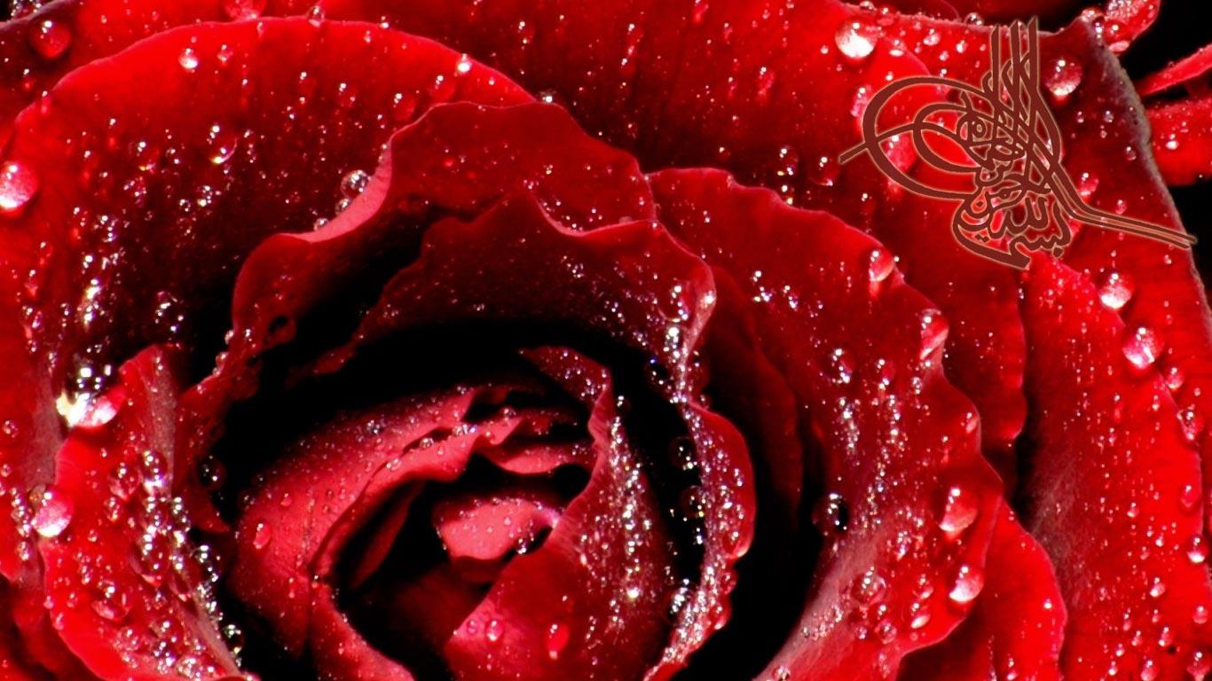 bismillah-rose