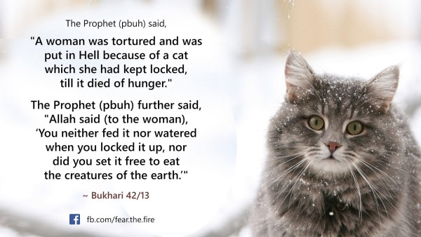 hadith about cats